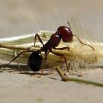 متى يأخذ النمل حقه بلا خجل؟